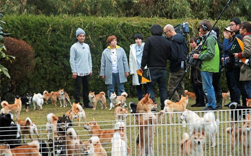 豆柴犬 撮影