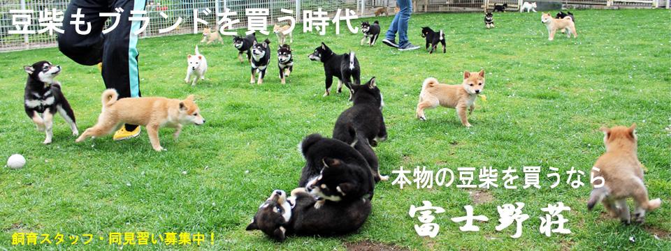 子犬〜成犬手前のグループの外遊びの様子