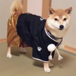 小太郎くん1歳の新年のご挨拶