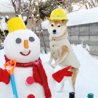 豆柴 口コミ《評判》札幌の石井様から<赤豆柴 小太郎くん>と雪だるまさんのお便り
