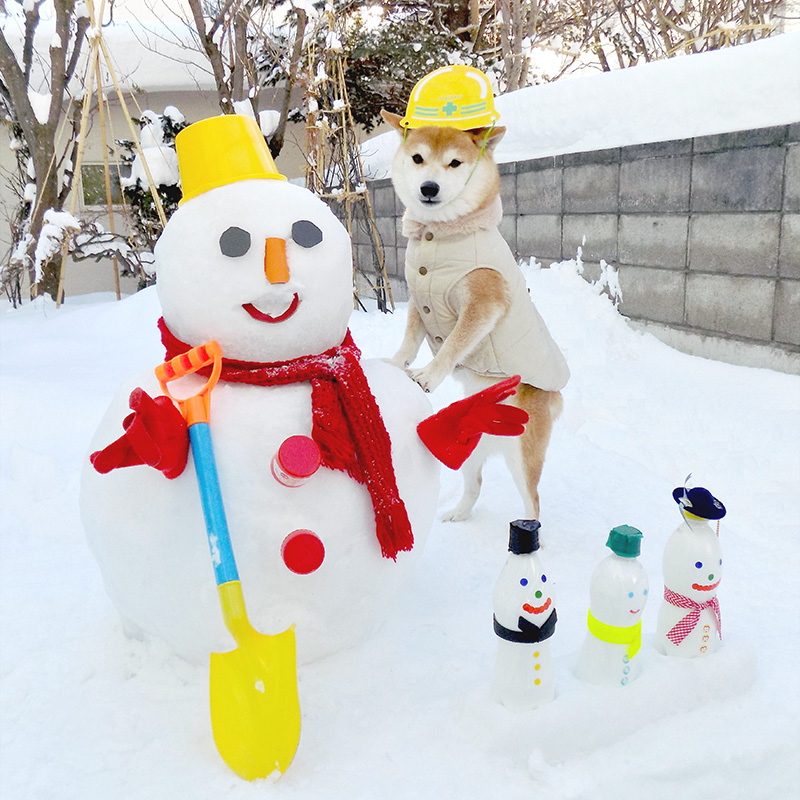 豆柴の小太郎くんと雪だるまさん
