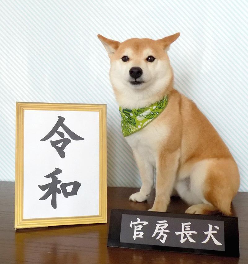 令和の小太郎くん