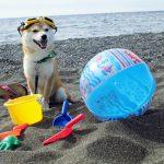 小太郎くんの砂浜遊び
