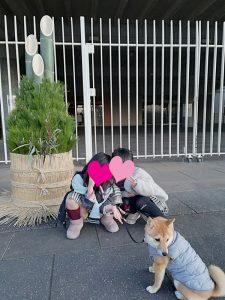 埼玉の極小豆柴犬 あづ姫ちゃん