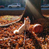 ニューヨークのCamilla様から<極小豆柴犬ライコくん>のお便り