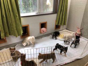 豆柴子犬のお部屋