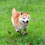 FP065_社会性訓育済み成犬