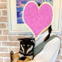 静岡県の岩倉様から<成犬でお迎えされた 森蔵くん>のお便り