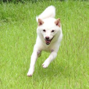 社会性訓育済み成犬 FP-082